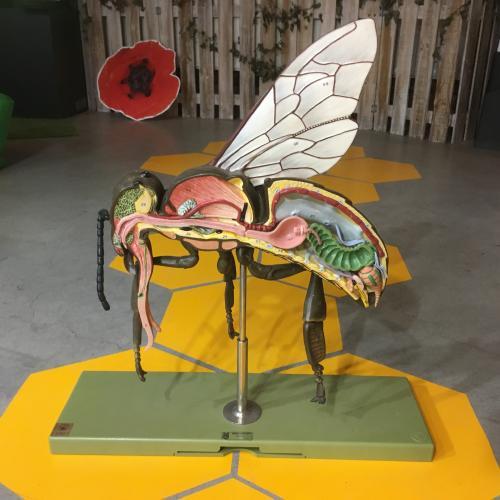 Modèle de l'abeille ouvrière