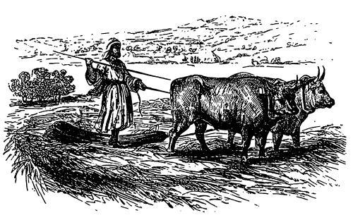 Utilisation du tribulum en Palestine